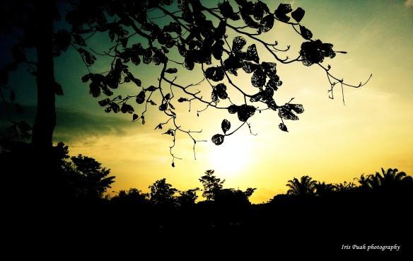 100615 Iris Puah