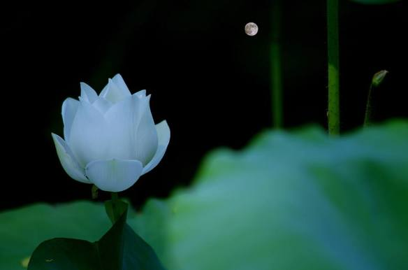 080816 Li Jia Yong